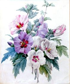 View A Bouquet of Rose of Sharon by Pierre Joseph Redouté on artnet. Browse more artworks Pierre Joseph Redouté from Arader Galleries. Fruit Illustration, Floral Illustrations, Botanical Illustration, Botanical Flowers, Botanical Art, Floral Flowers, Vintage Botanical Prints, Arte Floral, Vintage Flowers