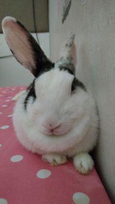 Always beautiful bunny