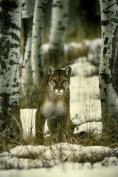 serwis randkowy cougar cubs swobodne łączenie się ze współpracownikiem