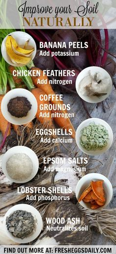 Instead of using commercial fertilizers and plant food, why not use some scraps from your kitchen that would otherwise end up in the trash or compost bin to amend and improve your garden soil naturally? Inexpensive and easy, these are my favorite ways to get my garden ready for spring planting. Eggshells, banana peels, Epsom salts, coffee grounds. Find out more at http://www.fresheggsdaily.com/2016/06/7-ways-to-improve-your-garden-soil.html