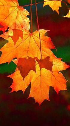 Beautiful autumn The post 31 Beautiful Autumn Wallpapers autumn scenery appeared first on Trendy. Fall Wallpaper, Nature Wallpaper, Wallpaper Backgrounds, Autumn Leaves Wallpaper, Beautiful Wallpaper, Halloween Wallpaper, Wallpapers, Autumn Scenes, Autumn Aesthetic