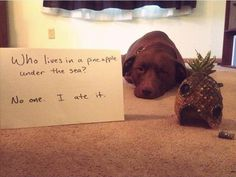 Shameful Dogs Are Hilarious When They Aren't Yours – 16 Pics