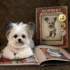 "‏@NorbertDog 26Sep2015 ""Then I realized, that's what I can do. I can make people smile, and that was always true.""  - Norbert Book 1"