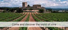 Torres Winery - Spain