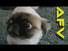 ★ Funny Cats & Dogs - America's Funniest Home Videos AFV Clips Compilation part 578 | OrangeCabinet