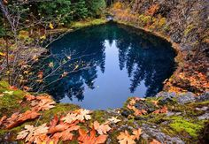The Blue Pool off of the McKenzie River in Central Oregon. Our home state is hard to beat.