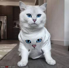 A Shirt Of Me - Daily Funny Cat Pictures from funnycatsite.com
