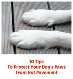 10 Tips To Protect Your Dog's Paws From Hot Pavement ... see more at http://PetsLady.com ... The FUN site for Animal Lovers