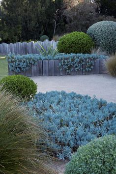 Rain and snow are going to play a huge part in your yard landscaping decisions. For example you will have to plan for your yard landscaping with care. Plants, Beautiful Gardens, Outdoor Gardens, Front Yard Landscaping, Australian Native Garden, Drought Tolerant Garden, Garden Design, Garden, Mediterranean Garden