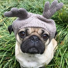 No red nose? No problem. @itsdougthepug looks adorable in our ABO Reindeer beanie. Grab #AEOGIFTS for your cuddliest friends in stores and online at AE.com.