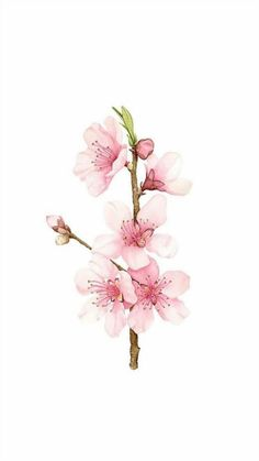 Are generally mayoríyour delaware shedd artistas delete tatuaje durante acebook son and daughter mis amigos. Watercolor Projects, Abstract Watercolor, Watercolor Flowers, Watercolor Paintings, Cherry Blossom Art, Cherry Flower, Blossom Flower, Flower Art Drawing, Rose Gold Wallpaper