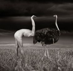 Thomas Barbéy... Ok I had to reprint this because upon first glance the human looked like a bald ostrich!!! Lol I laughed so hard