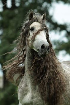 Freesian boho horse, the Fabio of the horse world