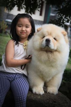 15 Interesting Facts About Chow Chow That You Didn't Know Baby Puppies, Baby Dogs, Cute Puppies, Cute Dogs, Dogs And Puppies, Doggies, Perros Chow Chow, Chow Chow Dogs, Cute Funny Animals