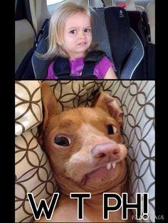 Phteven has competition omggggg haaaaaaaa Phillips-Barton Marie diessssssss Haha Funny, Funny Dogs, Cute Dogs, Funny Animals, Cute Animals, Hilarious, Funny Stuff, Tuna Dog, Jokes