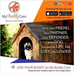 """""""A dog is the only thing on earth that loves you more than he loves himself."""" Love him back with the care and pampering he deserves. Donwload My Buddy Care The All-In-One Pet App for free now! Manage your Buddy's medical records, photos, license renewal and more all in one app. #mybuddycare #wheelofchange #doglovers #adoptiondrive #dogshow #dogadoptiondrive #puppylove #pawzupthepetshop #agilitytraining #petlovers #puppylove #buddylove #dogshow #doglovers"""