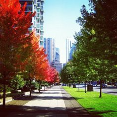 An #urban retreat awaits in downtown #Vancouver. From #Instagram user: ain_er88! #interfaceurbanretreat
