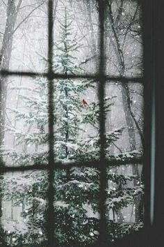 I am sharing some interesting snow images of the winter 2017 with you. and especially the latest 2018 photographs. great photography of winter like fog photography, iceberg photography and snowfall photography (Snow Images). Winter Szenen, Winter Love, Winter Magic, Winter Season, Winter Trees, Winter 2017, Winter Picture, Snowy Trees, Hello Winter
