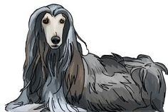 How to draw an Afghan Hound - redpinka43 - DrawingNow