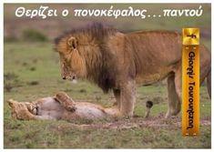 Funny Greek, Yolo, Kai, Funny Pictures, Jokes, Photos, Animals, Humor, Animales