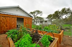 Moving?  potential looker if still available...........vegie garden  100 year old farmhouse on 8 acres outside of Austin