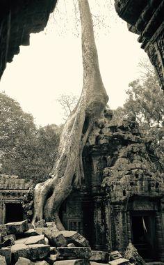 Angkor Wat, Jungle takes over