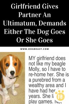 Girlfriend Gives Partner An Ultimatum Demands Either The Dog Goes Or She Goes Bull Mastiff Puppies, Regret Quotes, Teacup Chihuahua Puppies, Me And My Dog, Group Of Dogs, Interesting Animals, Dog Stories, Don't Like Me, Animals Of The World