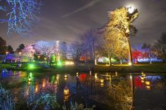 Syon Park's Enchanted Woodland is back for illuminating the trees from November This gorgeous array of lights and visuals is enough to . London Places, West London, Light Colors, Enchanted, Paths, Woodland, Trail, November, Lights