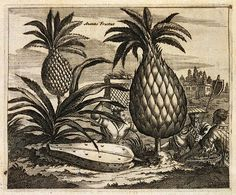 17th century engraved pineapple