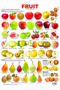 Fruit Chart - 1 catches the attention of tiny tots and makes them aware of the names of various fruits English Tips, English Study, English Class, English Lessons, Food Vocabulary, English Vocabulary, English Grammar, English Language Learning, Teaching English