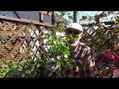 Jak ciąć róże jesienią? - YouTube Riding Helmets, Youtube, Grill, Polish, Gardening, Vitreous Enamel, Lawn And Garden, Youtubers, Nail