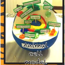 Image result for animal cell model styrofoam ball Science Cells, Science Fair, Teaching Science, Science For Kids, Life Science, Science Experiments, Craft Projects For Kids, Science Projects, School Projects