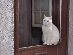 Lisbon cat