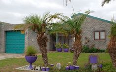 2 Bedroom House, Property For Sale, Plants, Planters, Plant, Planting