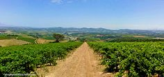 Somerset West, África do Sul Google Photoshop, Somerset West, Vineyard, Africa, Nature, Outdoor, Vines, Outdoors, Naturaleza