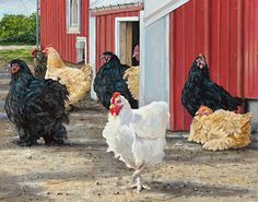 Farm & Country Art | Wild Wings