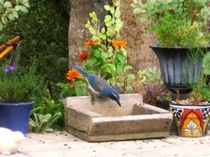 What is a backyard wildlife habitat? A Backyard Habitat is a transformation of your garden into a place that provides the things wildlife need to live there. You also 'reduce the civilization…