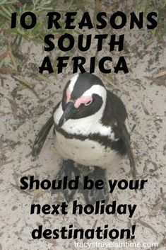 Thinking of visiting South Africa? After reading this you will be booking those flights! 10 reasons SOUTH AFRICA should be your next holiday destination! World Most Beautiful Place, Beautiful Places To Visit, Visit South Africa, Countries To Visit, Holiday Destinations, Travel Destinations, Next Holiday, Africa Travel, Travel Around The World