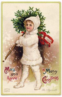 Joulukuusenhaku