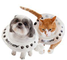 Small Protective Collar - BooBooLoon®
