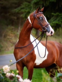 theequus:  Burnen With Color HF by CMBlum on Flickr.