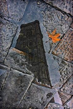 """We have the winners of the contest """"Snapshot of Florence - Istantanea su Firenze"""", congratulations to Alberto Busini for the Place! Color Photography, Fashion Photography, Autumn Leaves, Fallen Leaves, Puddle Jumping, Rainbow Sky, Quelques Photos, Dancing In The Rain, Great Shots"""