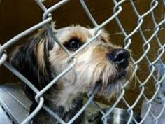 Are You Ready To Adopt A Pet? Porto Rico, Cat Crying, Dog Shots, Homeless Dogs, Animal Society, California Wildfires, Puppy Mills, Animal Welfare, Service Dogs