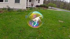 Ce chiot dans une bulle.