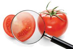 Contaminanti nella catena alimentare veneta