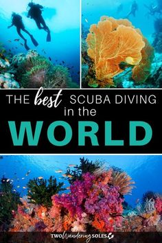 We've rounded up a list of the best scuba diving destinations in the world, from popular sites to those that are lesser-known, so you can create your own diving bucket list! Best Scuba Diving, Scuba Diving Gear, Cave Diving, Komodo National Park, Cozumel, Cancun, Tulum, Reef Shark, Underwater Photographer