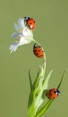 69 Ideas animal nature photography lady bug for 2019 Types Of Butterflies, Types Of Flowers, Beautiful Creatures, Animals Beautiful, Cute Animals, Beautiful Bugs, Beautiful Flowers, Bugs And Insects, Tier Fotos