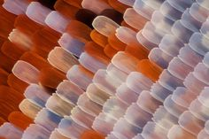 Linden Geldhill // Butterfly Wings Under a Microscope