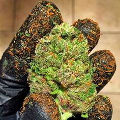 Last chance to save big! Enroll now and get certified as a #cannabis grower and #budtender! www.thectu.com