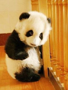 Baby Panda in da house! I love Andy Pandy <3